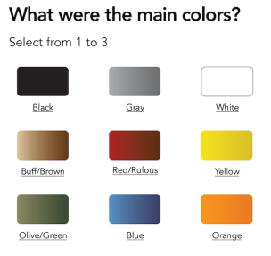 bird-colors